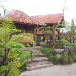 Saung